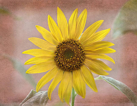 Sunflower Warmth by Sandi OReilly