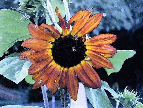 Sunflower with bee by Eunice Olson