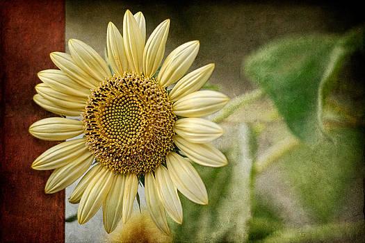 Zoran Buletic - Sunflower