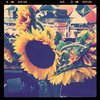 Sunflowers From My Sissy :) by Jessica Jaco