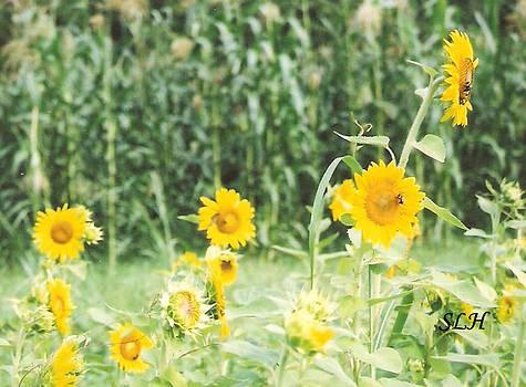 Lee Hartsell - Sunflowers