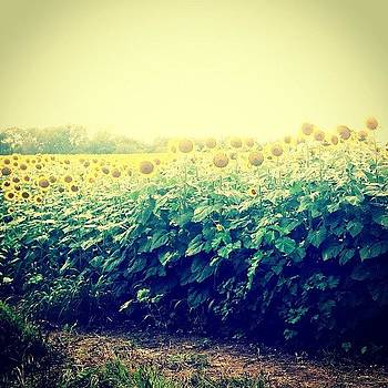 Sunflowers On The Way Home by Love Bird Photo