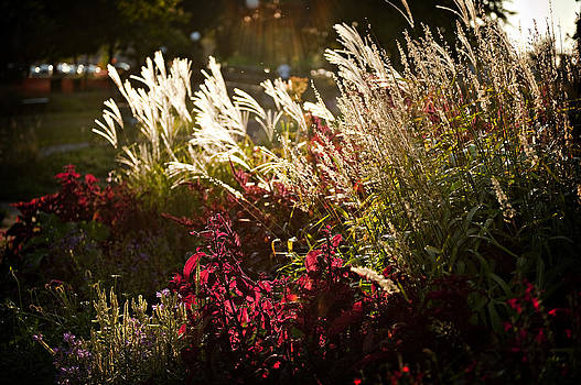 Sunlight in the Garden by Laurianna Murray