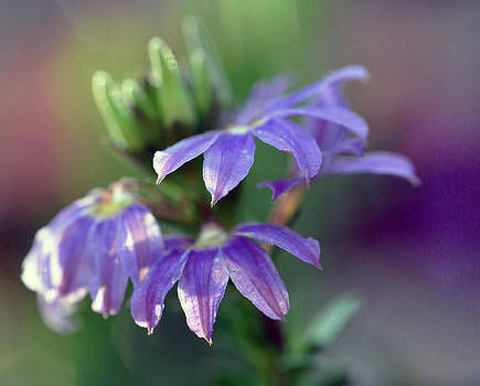 Sunlight on Purple by Tracey Tilson