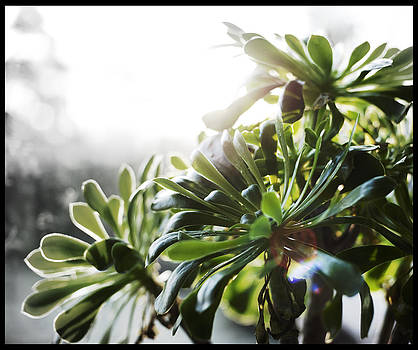 Sunlight Seeker by Sherry Fain
