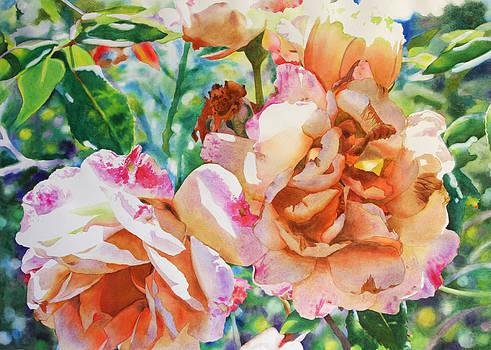 Sunlit Roses by Kathleen Ballard