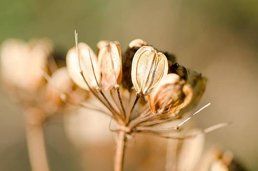 Margaret Pitcher - Sunlit Seeds