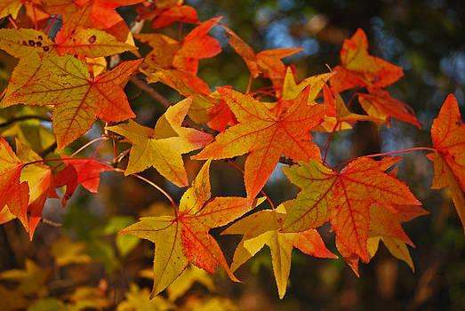 Michelle Cruz - Sunny Autumn Leaves
