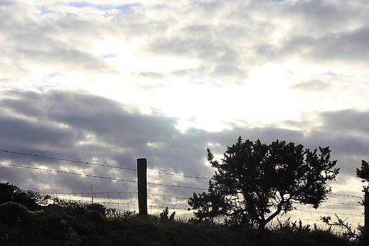 Joseph Doyle - Sunny evening silhouette vignette