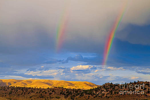 Sunny Rainbow by Barbara Schultheis