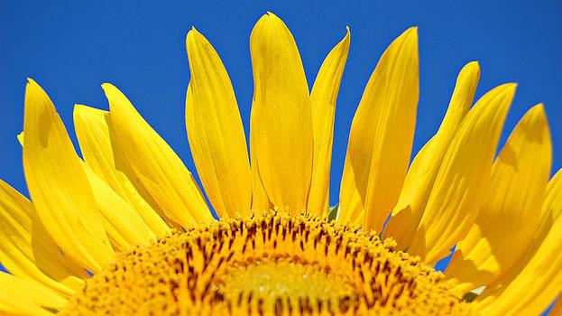 Sunny Skies by Amy Schauland