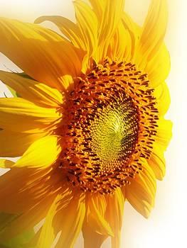 Lynnette Johns - Sunny Softness