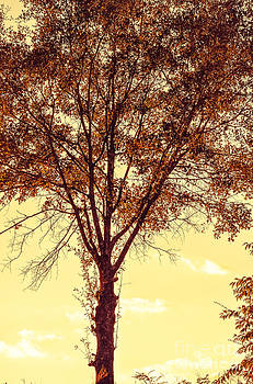Sunny Tree by Reflections by Brynne Photography