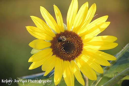 Sunrays by Kristy Jordan