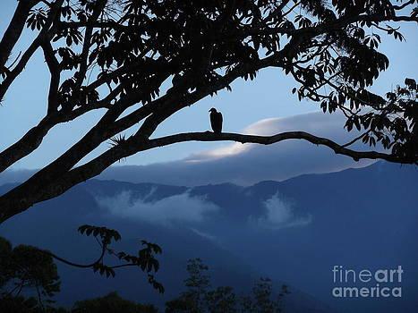 Sunrise at Talari Lodge by Heather Jett