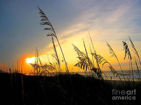 Sunrise Behind Sea Oats by Julie Bostian