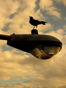Stuart Brown - Sunrise Bird And Lamp Post 2