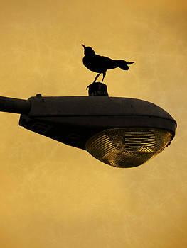 Stuart Brown - Sunrise Bird And Lamp Post