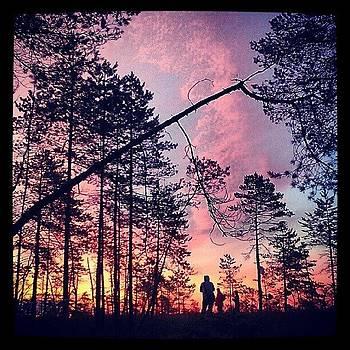 #sunrise Burned #swamp by Luise Sommer