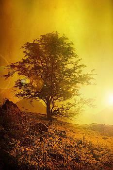 Svetlana Sewell - Sunrise Flare
