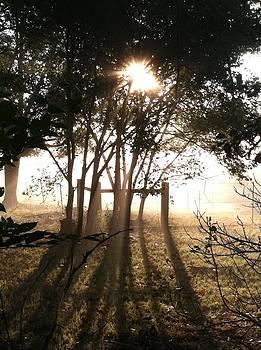 Sunrise Fog by Judith Angell Meyer