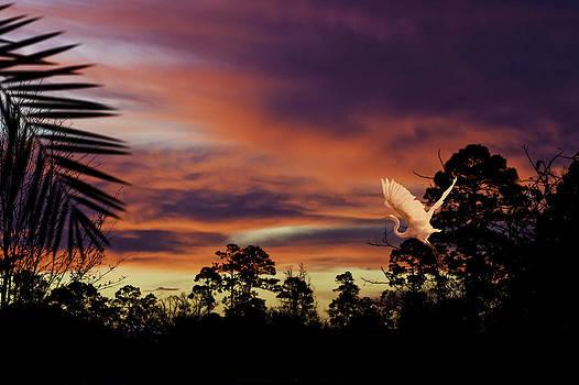 Sunrise Heron by Jim Ziemer