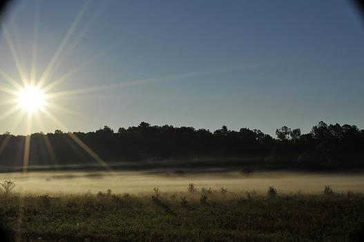 Elaine Mikkelstrup - Sunrise in Waverley