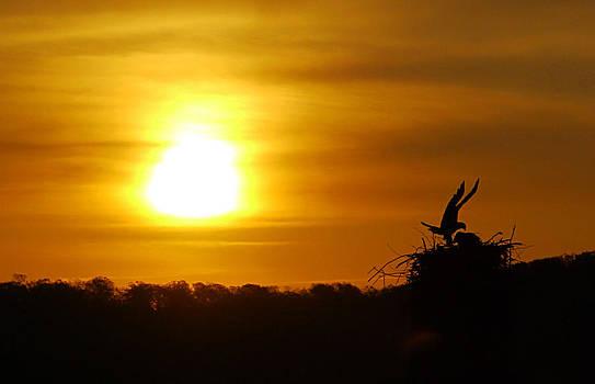 Sunrise Nest by Bob Lennox