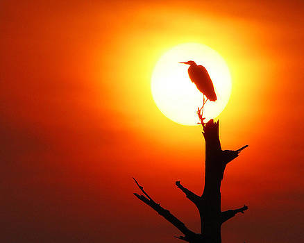 Sunrise Sentinel by Jessie Dickson
