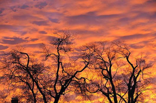 Sunrise Silo Trees by Bob Lennox
