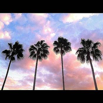 Sunset :) #palmtrees #trees #red by Caitlin Salvitti