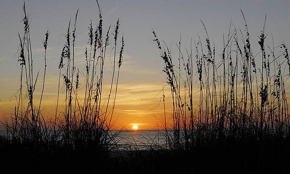 Sunset - Seaoats by Kirk Stanley