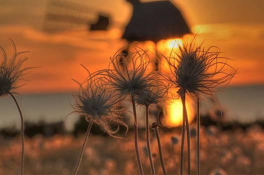 Sunset 2 by Christoffer Rathjen