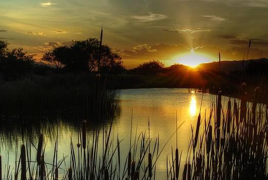 Tam Ryan - Sunset and Cattails