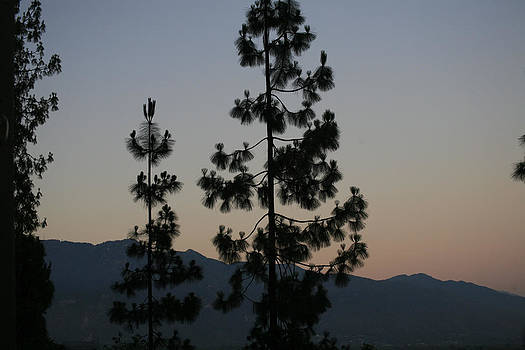 Sunset and Pine Trees by Ann Marie Donahue