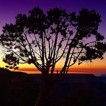 #sunset At Grand Canyon With A Cool Tree by Michael Misciagno