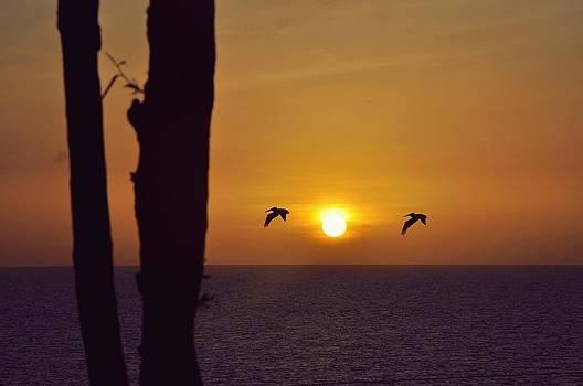Sunset Beauty by Nur Elneser