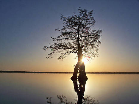 Sunset Behind a Tree by Tanya Moody