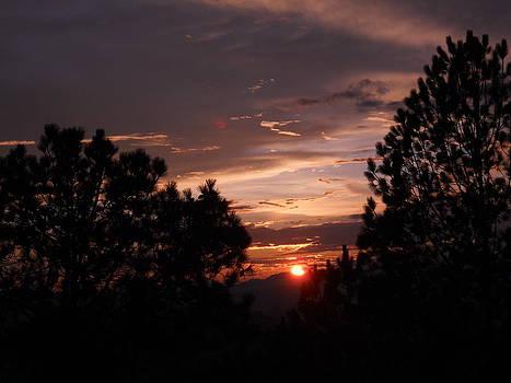 Sunset between pine trees  by Mamta Joshi