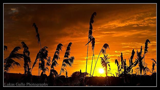 Sunset Christchurch by Lukas Gallo