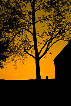 Sunset Glow by Thomas DOrsi