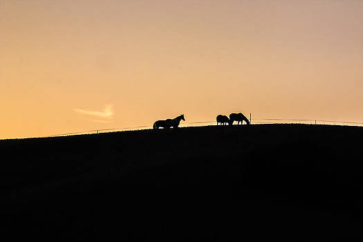 Sunset Horses by Chris Fullmer