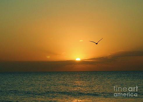 Sunset in Flight by Dennis Curry