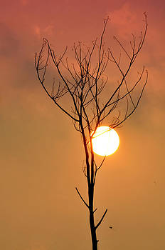 Sunset on burned tree by Woody Satya Darma