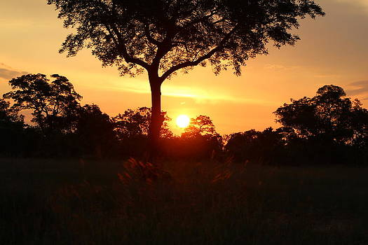 Sunset on Safari in South Africa by Denise Dean