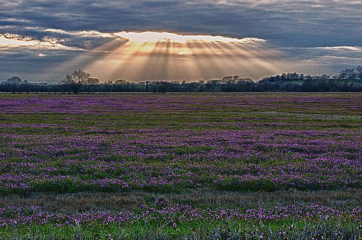 Sunset over flowers by Ray Downs