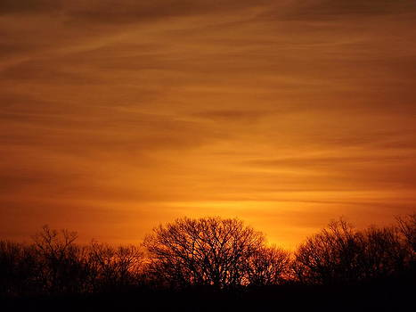 Sunset Over the Trees by Abe Fogle