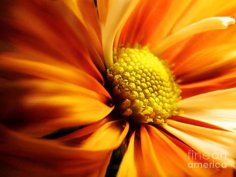 Anne Ferguson - Sunset Petals