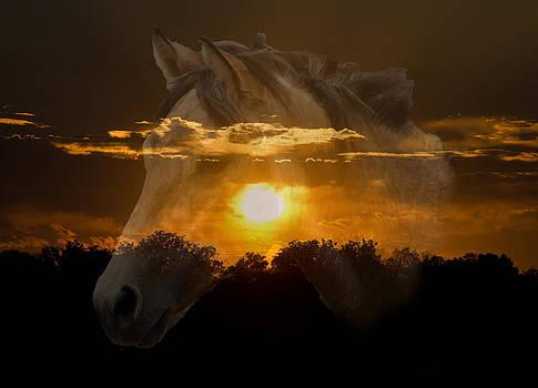 Lisa Moore - Sunset Silhouette