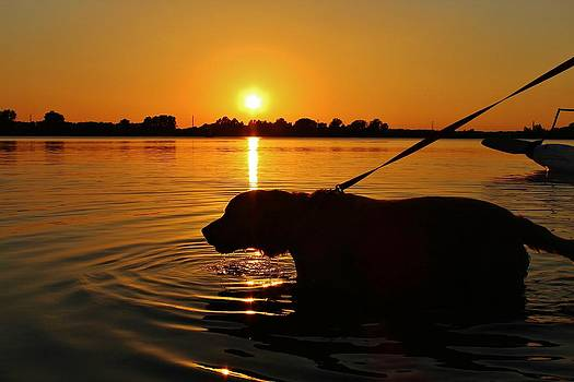 Sunset Swim by Alexander Spahn